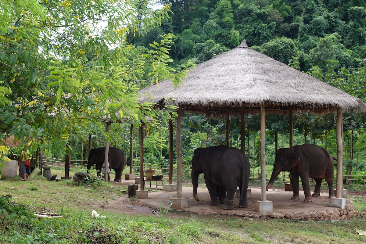 Elephants in Myanmar