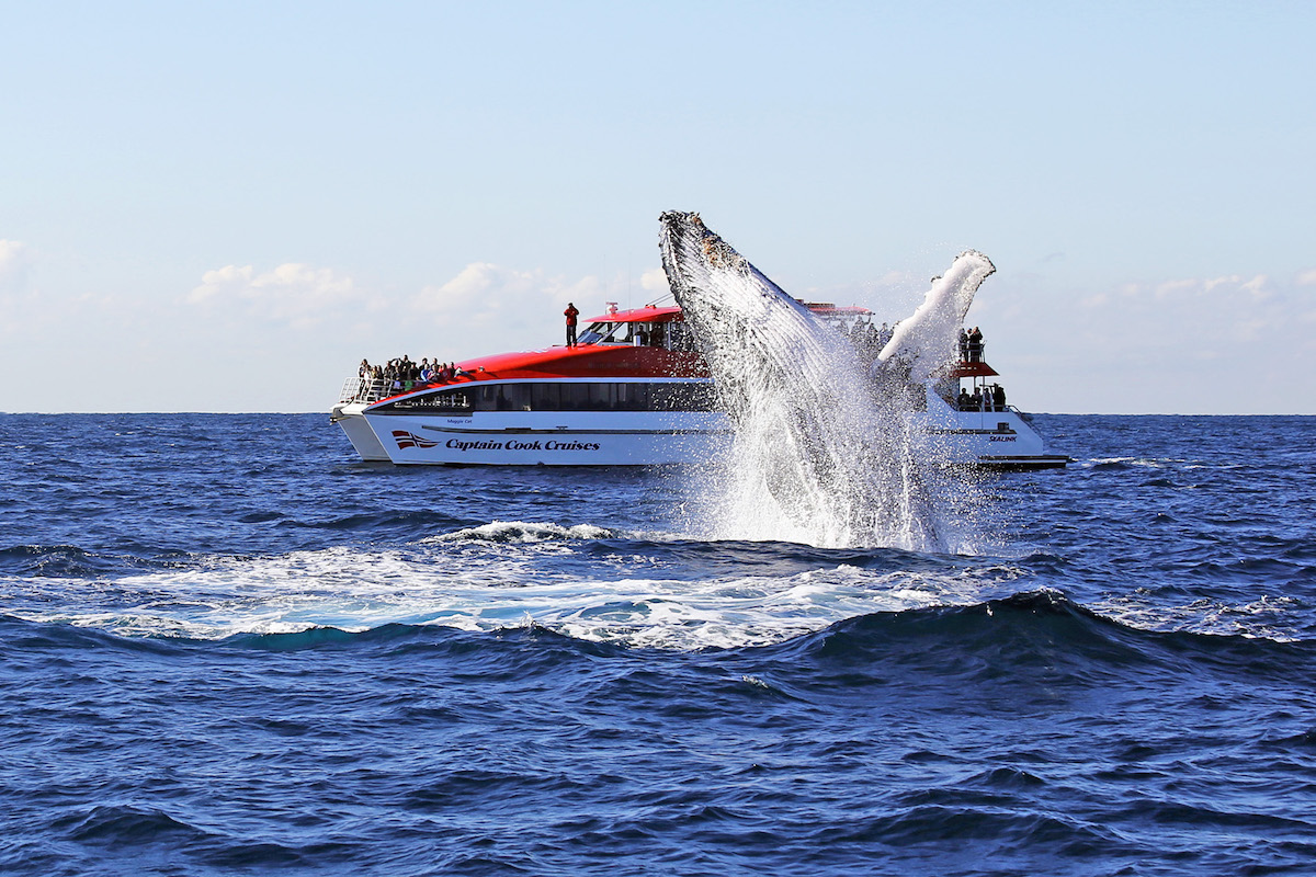 Captain Cook Whale Watching Cruise