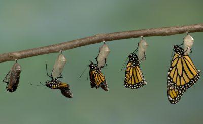 Six factors to lead through change
