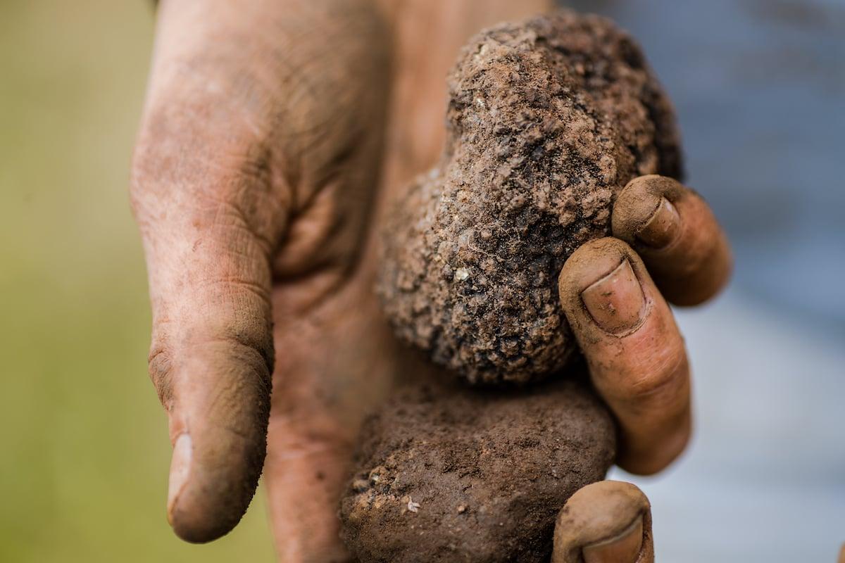 Holding truffles