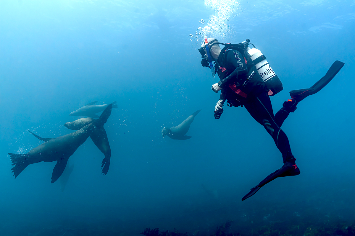 Diver with seals