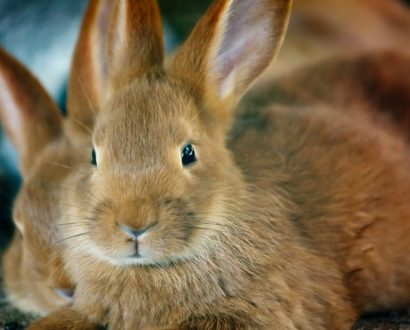 Cruelty-free beauty companies will soon be able to enter China