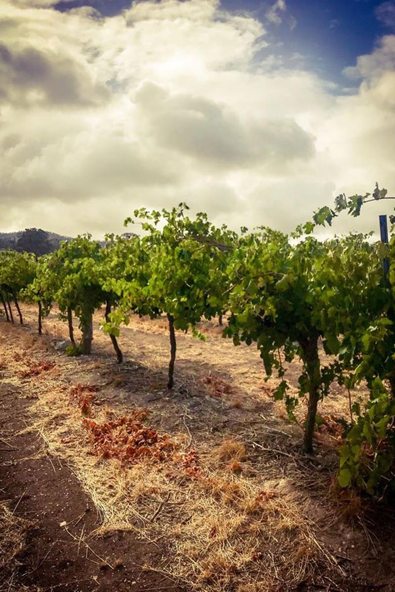 wine industry covid
