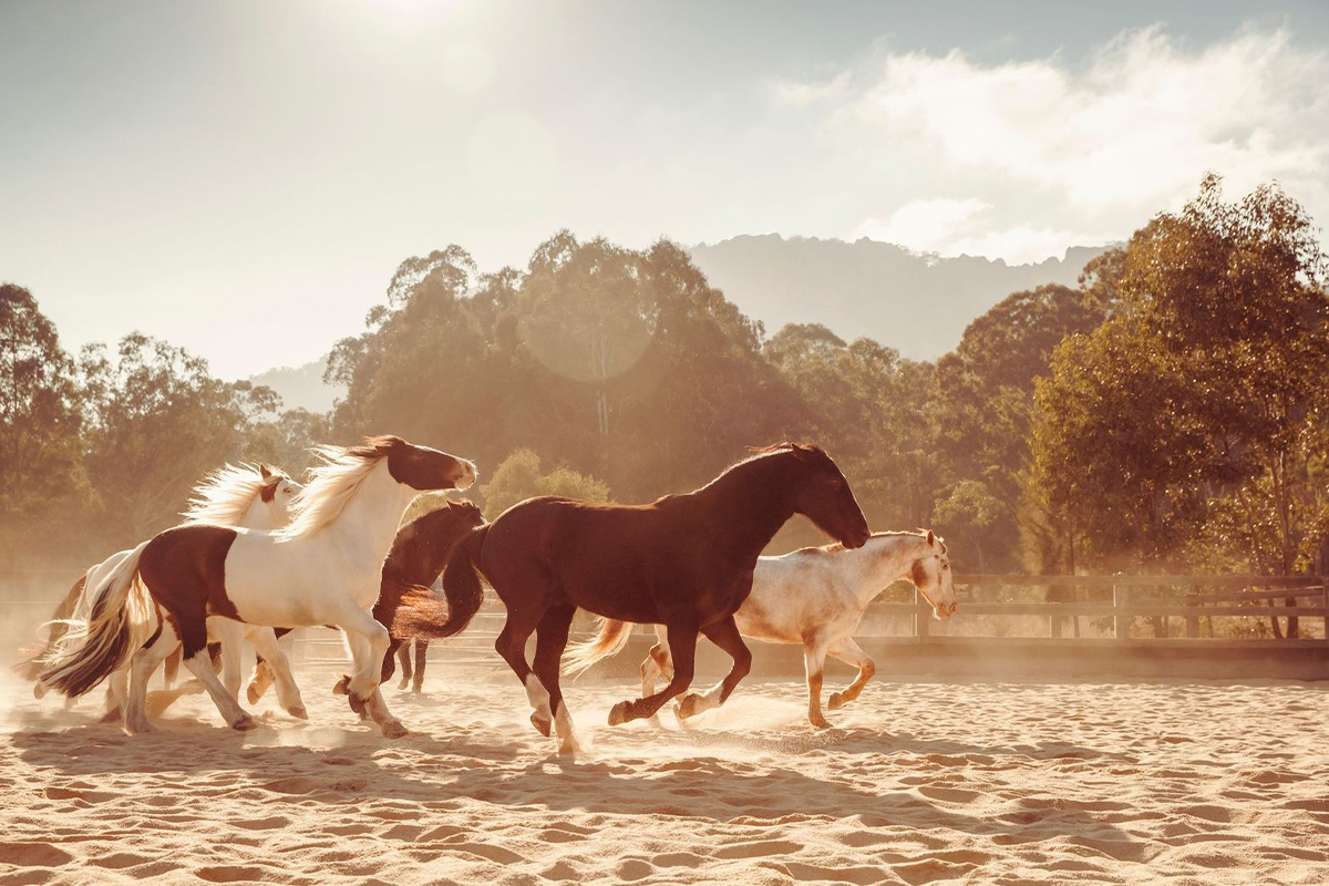 Luxury escapes Australia