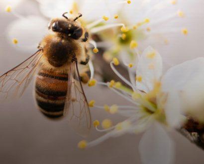 bees guerlain