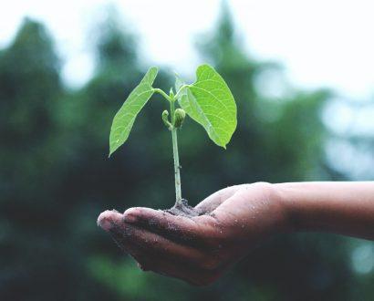 KOL Group working towards sustainability
